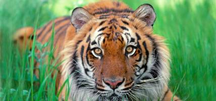 Tiger-Spotting-India