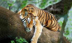 Tiger-Trail-Itinerary-Main-Wildlife-Food-and-Wellbeing-India