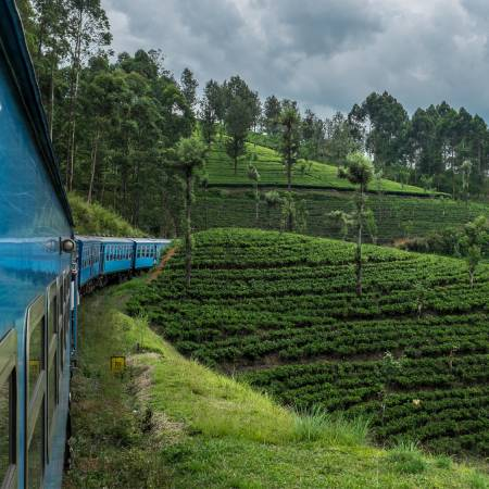Train in Nuwara Eliya