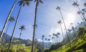 Valle de Cocora - Colombia - On The Go Tours copy