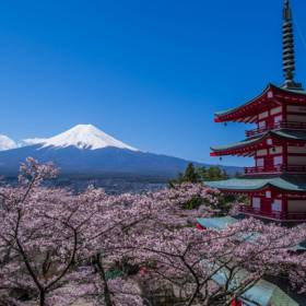 View of Mt Fuji - Cherry blossom in Japan - On The Go Tours