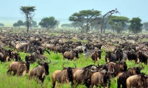Wildebeest Migration - Africa Overland Safaris - Africa Lodge Safaris - Africa Tours - On The Go Tou