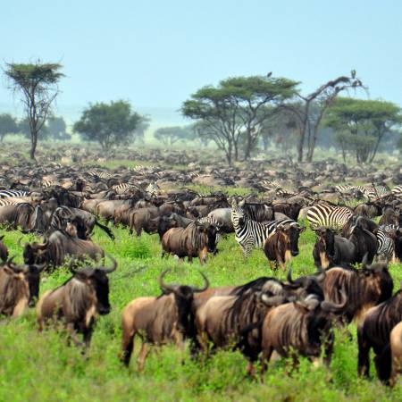Wildebeest Migration - Africa Overland Safaris - Africa Lodge Safaris - Africa Tours - On The Go Tou