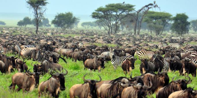 The Migration | Kenya & Tanzania | Africa