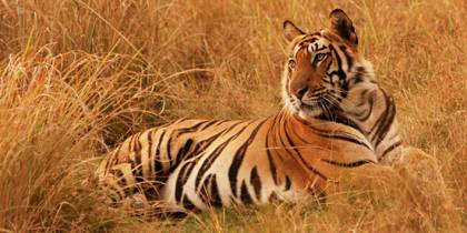 Wildlife of the Indian Subcontinent - page tab menu image - On The Go Tours