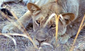 Wildlife-Express-Itinerary-Main-Overland-Journeys-Africa
