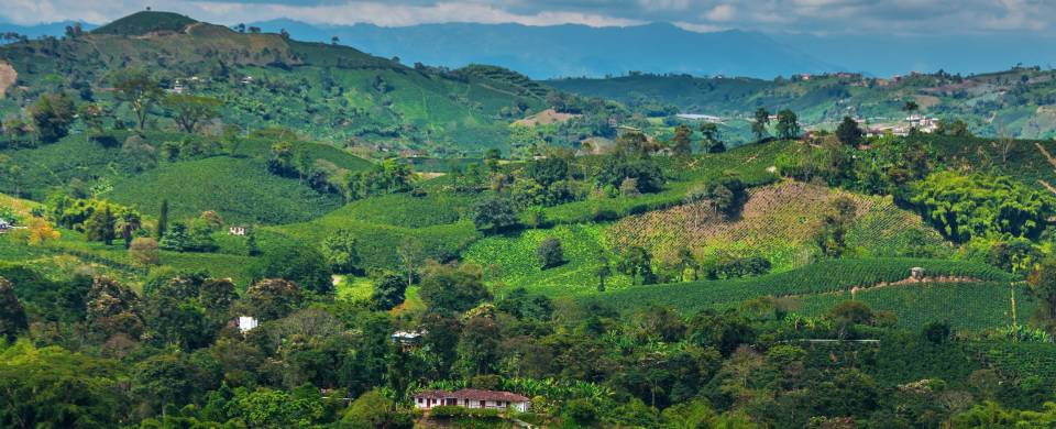The picturesque Zona Cafetera in Colombia with coffee plantations and rolling hills