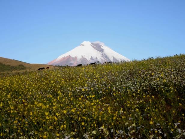 Cotopaxi volcano towering over the landscape in Ecuador