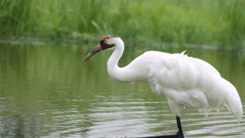 Private Day-Trip to Bharatpur Bird Sanctuary from Agra